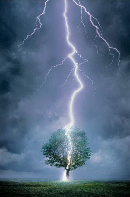 lightning-strike-tree2