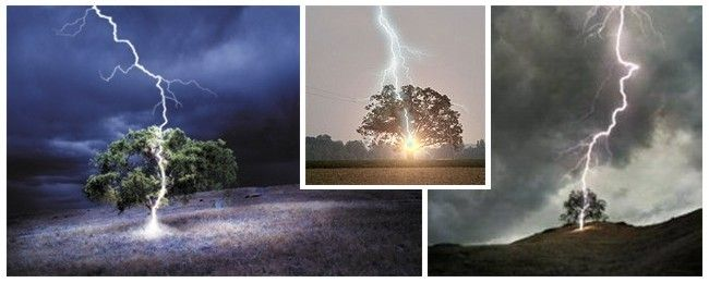 lightning-strike-tree3-4-5